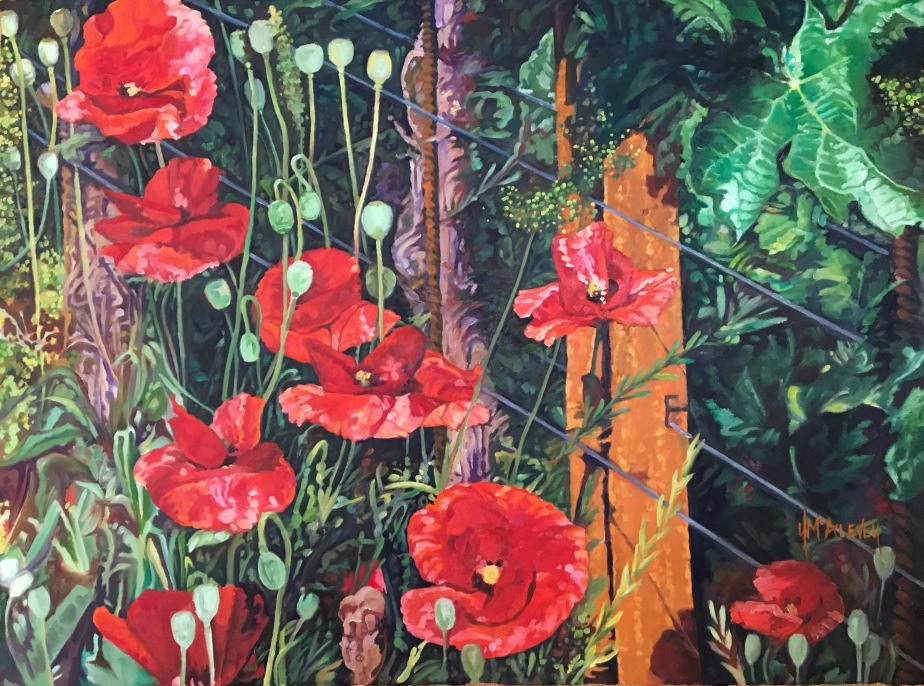 Poppies In TheVineyard